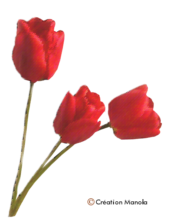 Broderies fleurs 1
