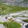 Les Baz ou Batz de Peyrenère
