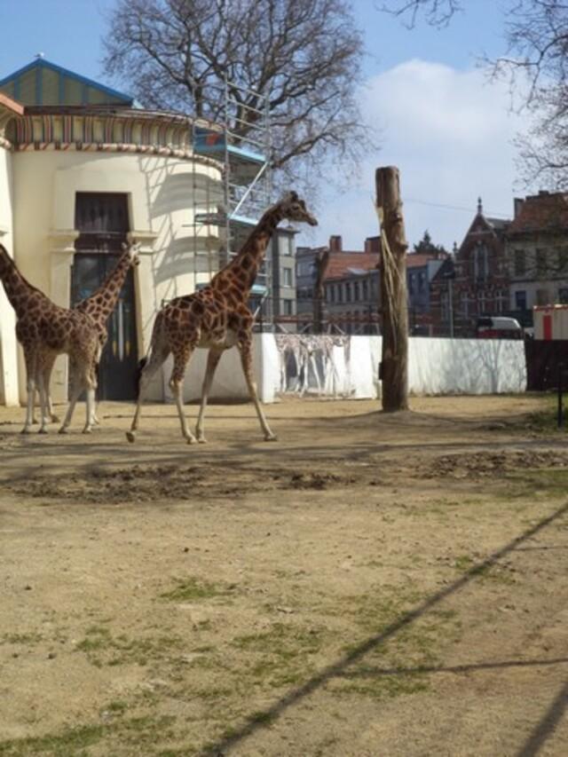 Zoo Anvers (vacances printemps Service d'Accueil)