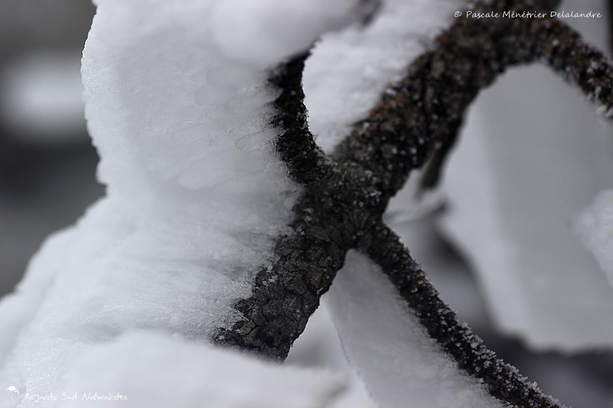 La neige au Mont-Aigoual