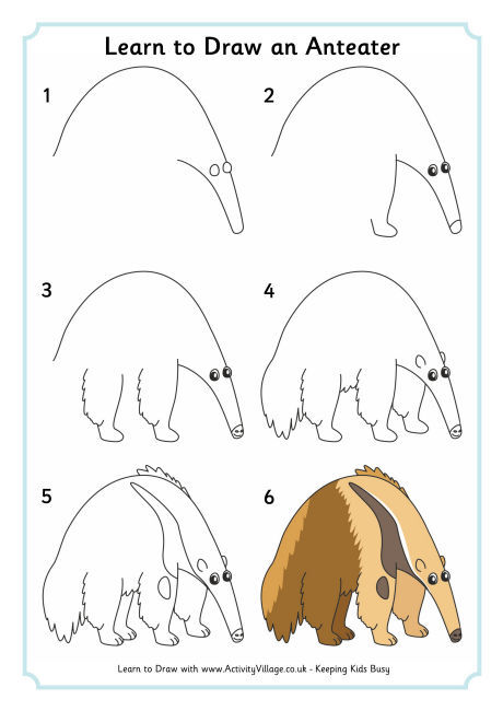 Learn to draw an anteater