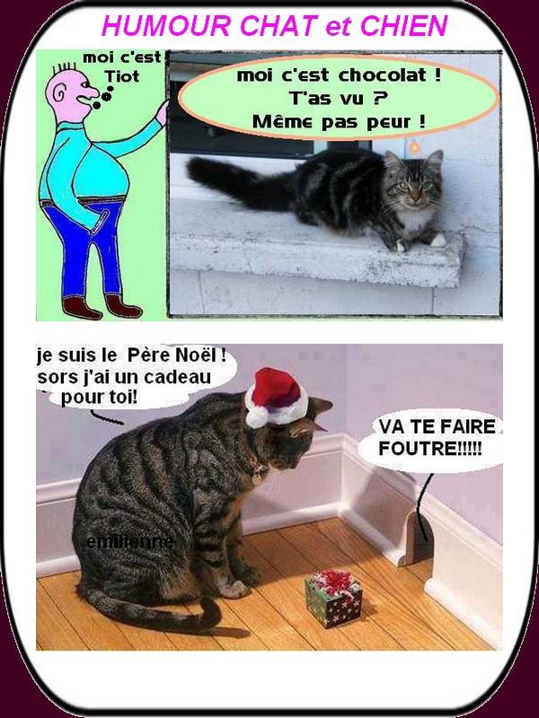 humour chat et chien 01