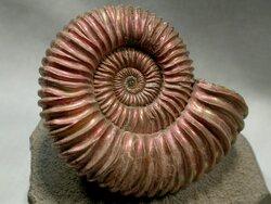 Graphisme n°8 - la spirale (MS-GS)