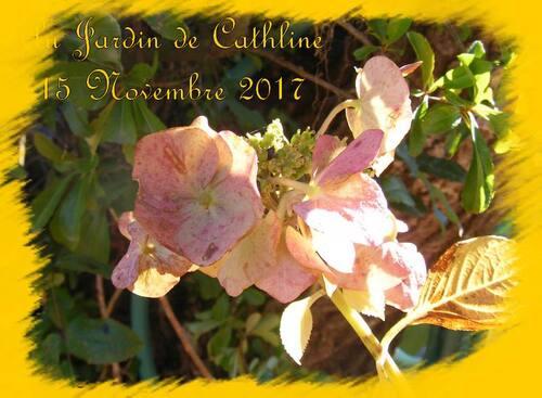 jardiner avec la lune du 16 au 31