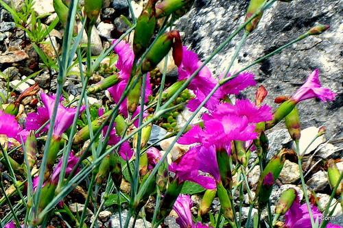 Une belle couleur pour ces fleurs