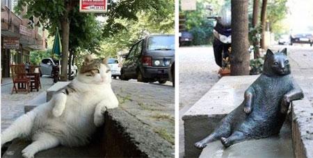 Tombili la chatte immortalisée à Istambul