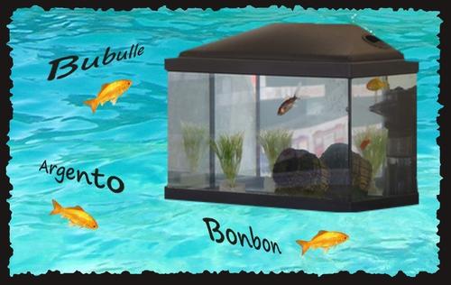 Un aquarium dans la classe