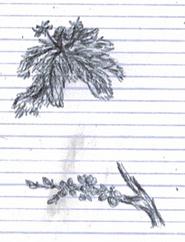 Les dessins faits en cours (suite 5)