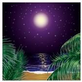 Nuit tropicale avec palmes.