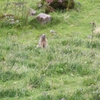 Marmottes du cirque d\'Eylac