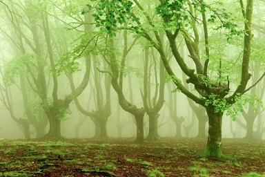 Forêt mystérieuse ...