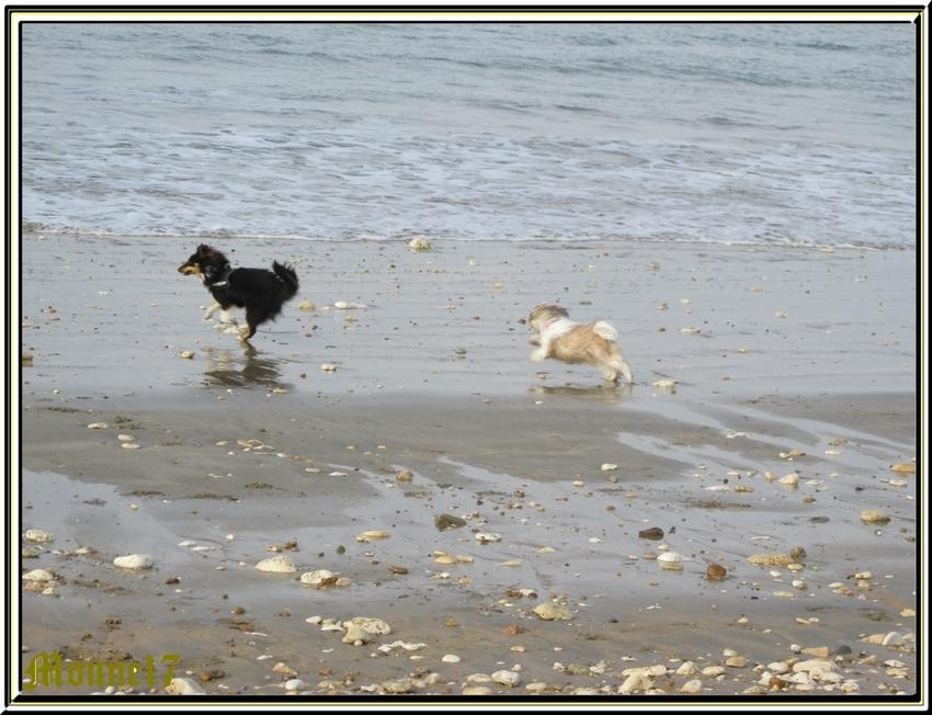 Falcon et Hermione à la plage