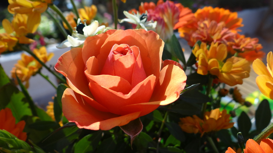 Le Marché de la Semaine + Le bouquet du Vendredi