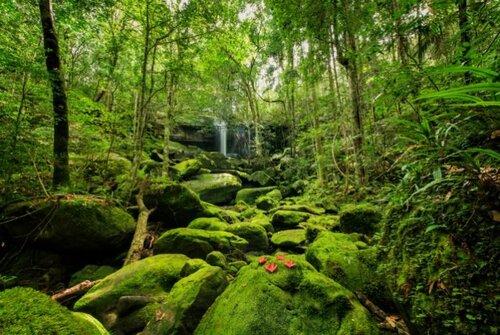 Lutte contre la déforestation