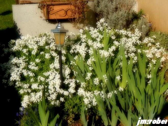 Enfin le printemps est arrivé......