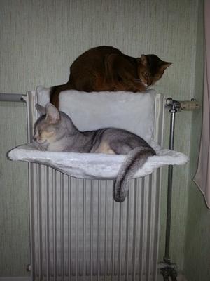 Autour du radiateur !!!!