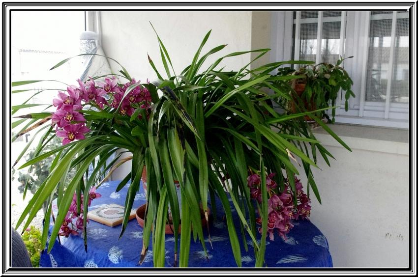 Des orchidées pour vous souhaiter