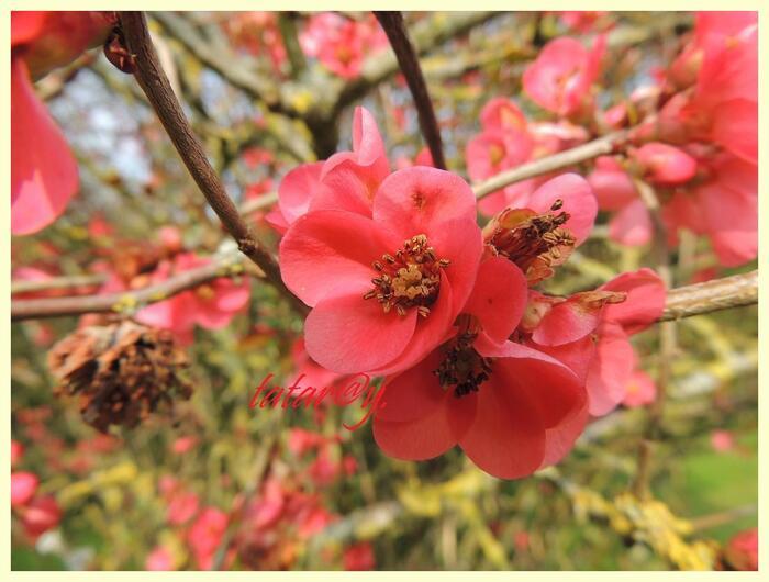 Le printemps en rouge...