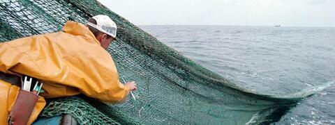 L\'interdiction de la pêche à plus de 800 mètres de profondeur dans les eaux de l\'Union européenne entre en vigueur le 12 janvier 2017.
