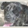 Benji 2