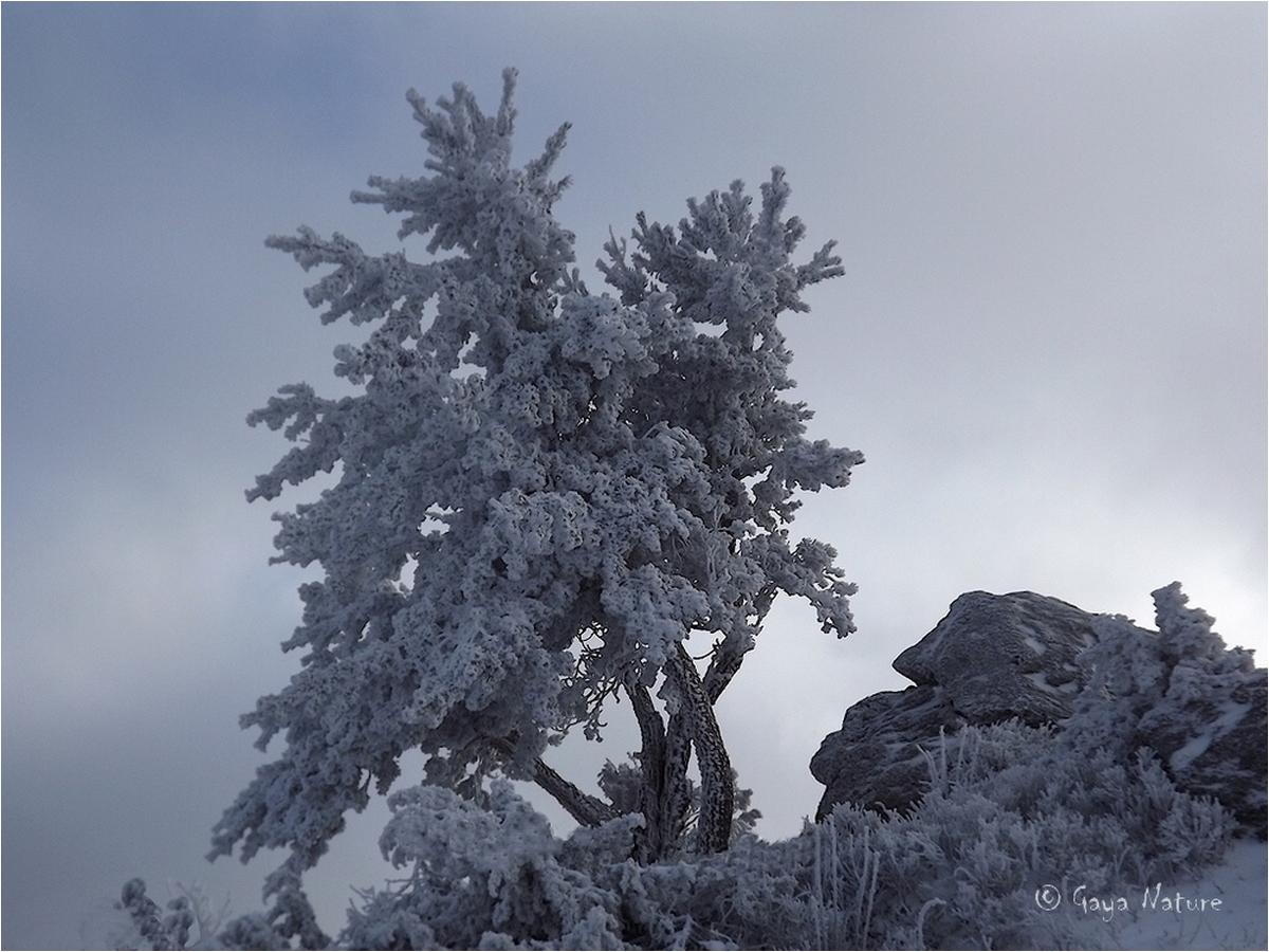 Le solitaire en hiver