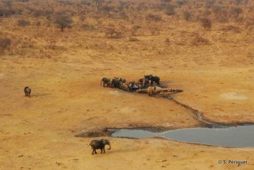 Rhino & buffalo capture down Wilderness