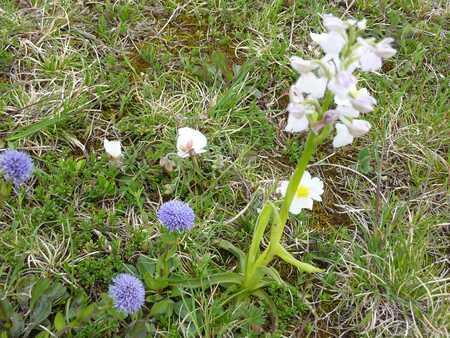 Le plateau d'Argentine et ses fleurs.