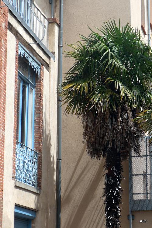 Les palmiers en façade !