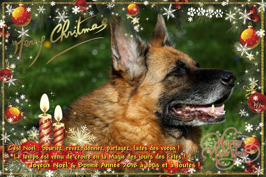 Un Joyeux Noël de Tara