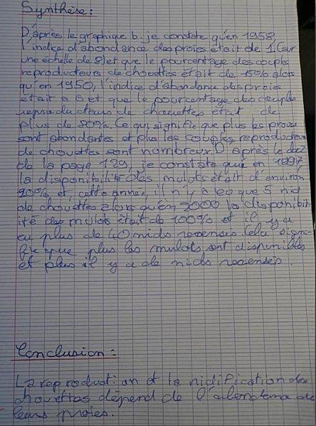 chouette-2.jpg