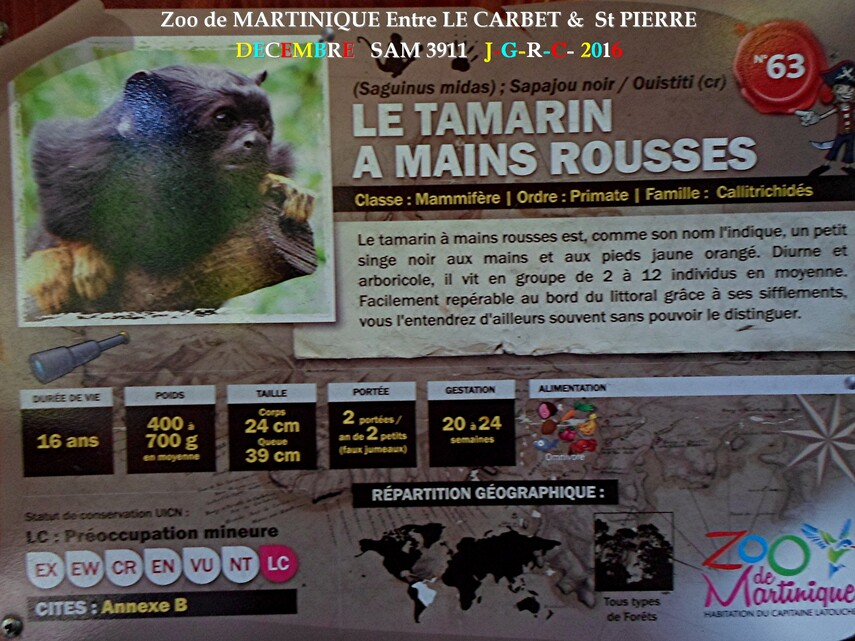 ZOO de MARTINIQUE 3/5 - 8/15  LE CARBET  972      D  14/11/2017