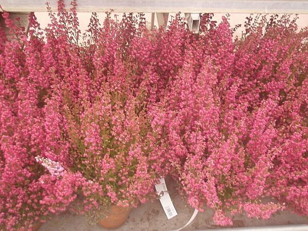fleurs d'automne 017