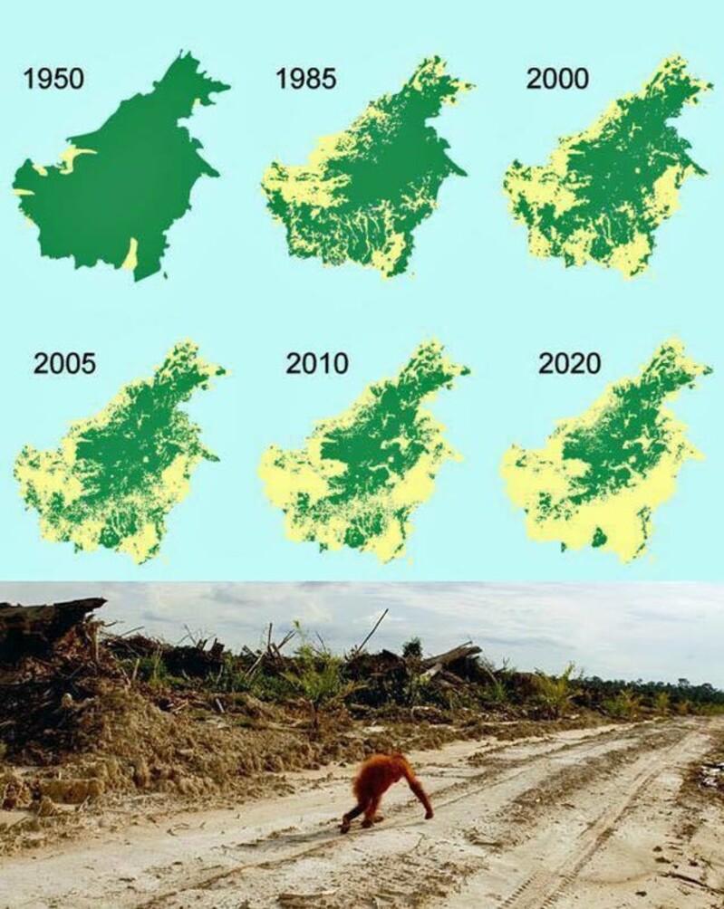 L'UE repousse la sortie de l'huile de palme à 2030 !