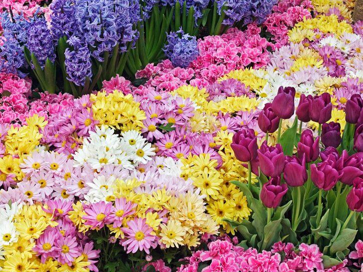 10 Images de fleurs - 2