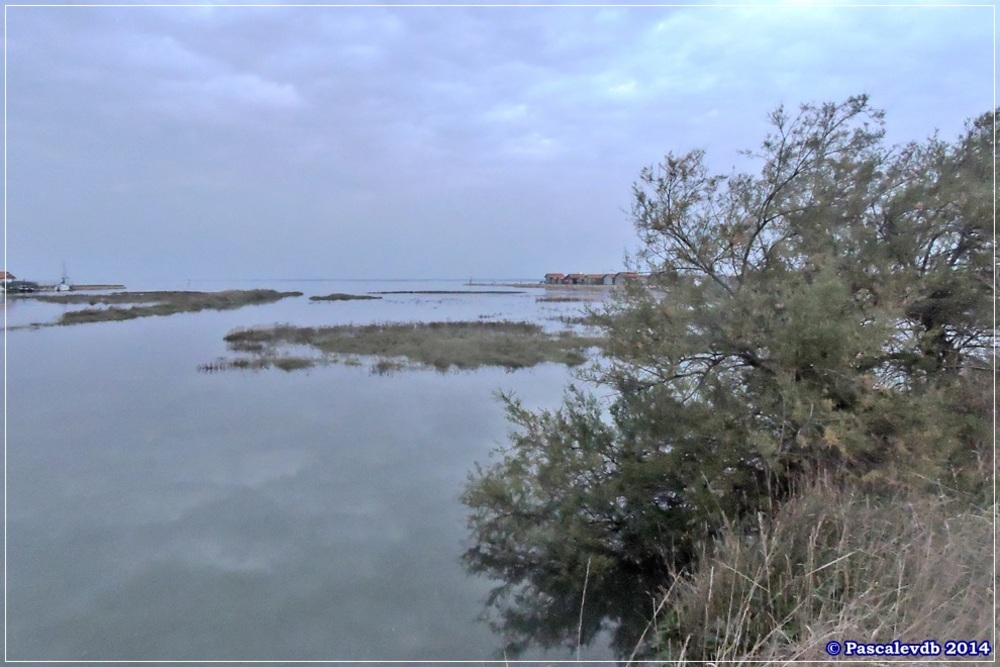 Sur le sentier du littoral de Gujan Mestras à La Hume - 4/4