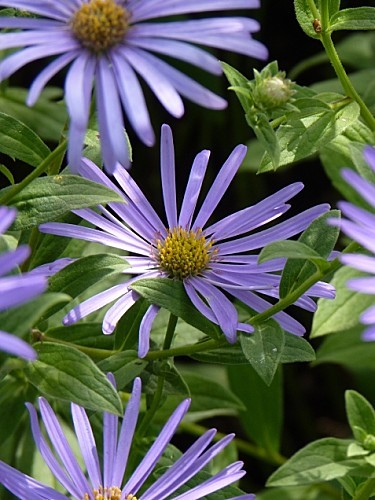 Mandala 03 Fleurs de septembre