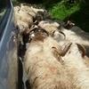 PIC D'ANIE ET SOMMETS DES ARRES 15 06 2011