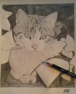 dessin en cour, chat