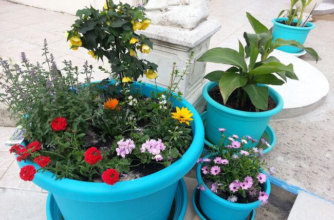Jardinières d'été.