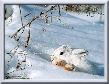 lapin_dans_neige