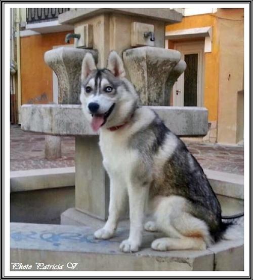Inouk (6,5 mois)
