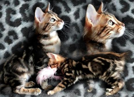Aléjandro8295753-bw-leopard-peau-arriere-plan-ou-la-texture-grande-resolution