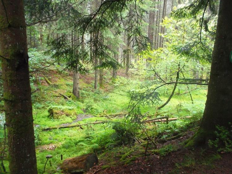 Vosges-la source du Durbion/la cascade du Rudlin
