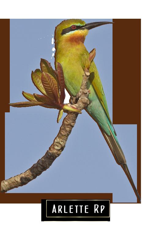 Tubs oiseaux 2 New