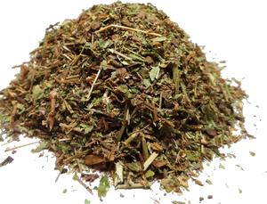 Vertus médicinales des plantes sauvages : Véronique Officinale