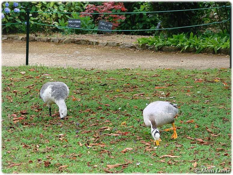 Parc_ornithologique_17Juil09_1