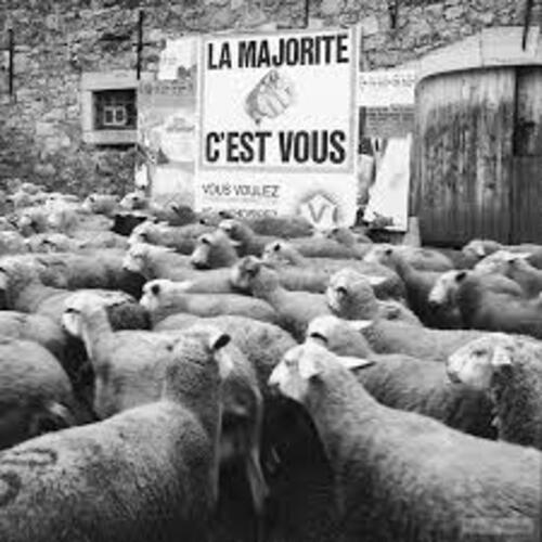 D'où viennent nos idées moutonnières (1) : notre cerveau
