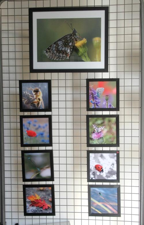 Les belles photos de Claudie Hardouin sont à admirer à l'Office du Tourisme du Pays Châtillonnais