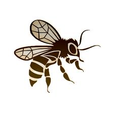 """Résultat de recherche d'images pour """"reine des abeille"""""""