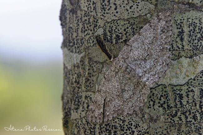 Série papillons